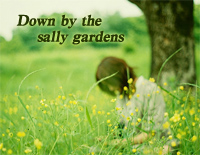 Down by the Sally Gardens-David Nevue